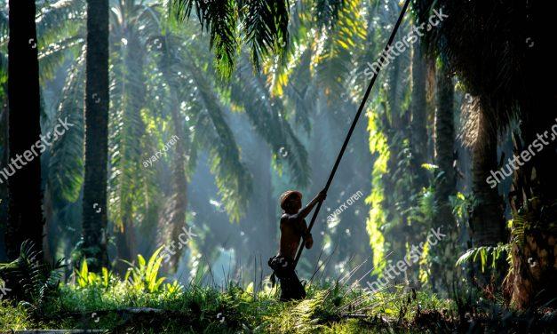 Minyak Sawit Dan Keluaran Dalam Negara Kasar